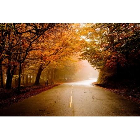 Route de forêt en automne, impression sur Déco'R,  Imprim'Déco spécialiste du grand format