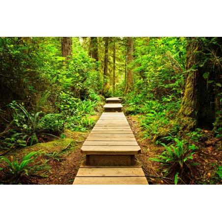 Escaliers de bois en forêt, impression sur Déco'R,  Imprim'Déco spécialiste du grand format