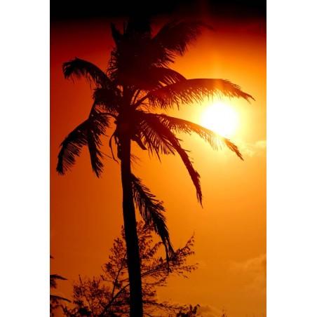 Palmier sur ciel rouge, impression sur Déco'R,  Imprim'Déco spécialiste du grand format
