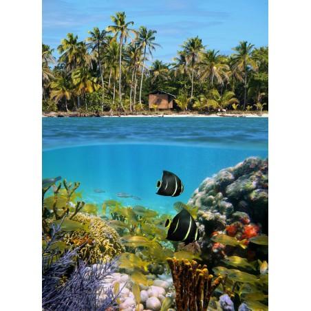 Poissons des îles, impression sur papier peint intissé, Imprim'Déco spécialiste du grand format