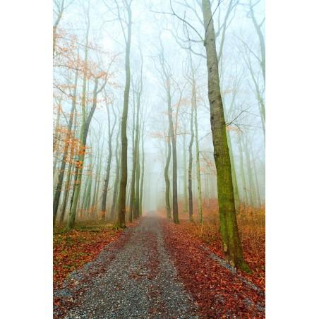 Chemin dans les bois d'automne, impression sur papier peint intissé, Imprim'Déco spécialiste du grand format