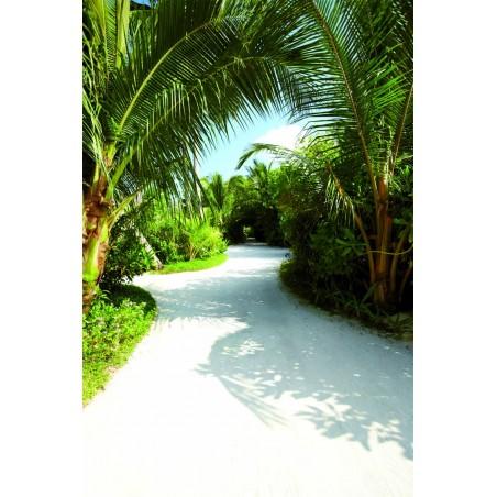 Chemin dans les palmiers, impression sur papier peint intissé, Imprim'Déco spécialiste du grand format