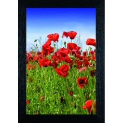 Tableau Coquelicots 2
