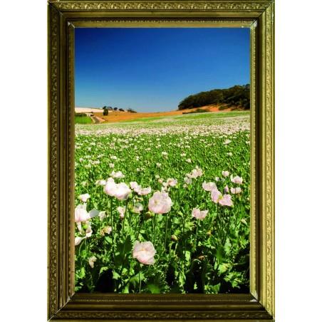 Tableau Champ de fleurs, exclusivité de Imprim'Déco, magasin en ligne spécialisé en déco murale