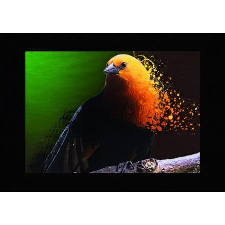 Tableau oiseau étincellant, exclusivité de Imprim'Déco, magasin en ligne spécialisé en déco murale