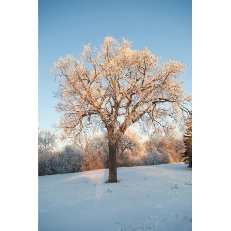Un arbre en hiver , impression sur Déco'R,  Imprim'Déco spécialiste du grand format