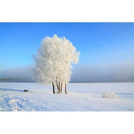 Campagne en hiver , impression sur Déco'R,  Imprim'Déco spécialiste du grand format