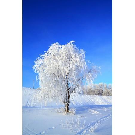 Un arbre en hiver 2 , impression sur Déco'R,  Imprim'Déco spécialiste du grand format