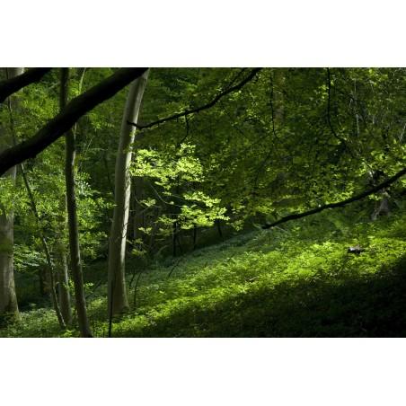 Sous bois d'été, impression sur Déco'R,  Imprim'Déco spécialiste du grand format