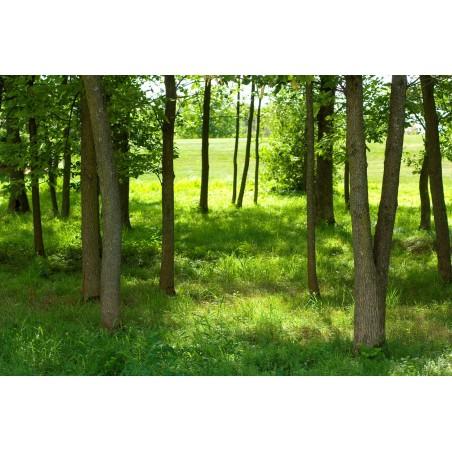 Sous bois d'été 2, impression sur Déco'R,  Imprim'Déco spécialiste du grand format