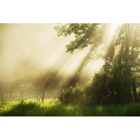 Sous bois dans la brume, impression sur Déco'R,  Imprim'Déco spécialiste du grand format