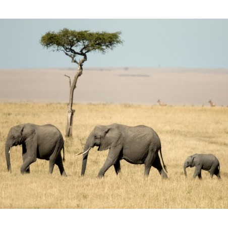 Famille éléphant , impression sur Déco'R,  Imprim'Déco spécialiste du grand format