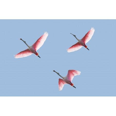 Flamants roses, impression sur Déco'R, Imprim'Déco spécialiste du grand format