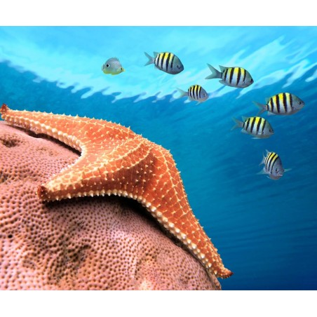 Etoile de mer, impression sur Déco'R, Imprim'Déco spécialiste du grand format