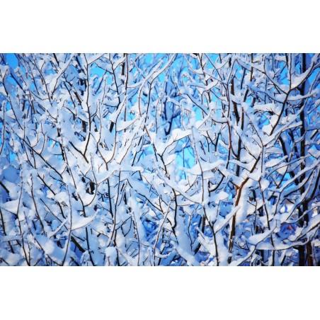 Branches d'arbre enneigées, impression sur Déco'R, Imprim'Déco spécialiste du grand format