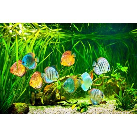 Aquarium exotique, impression sur Déco'R, Imprim'Déco spécialiste du grand format