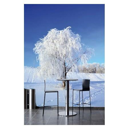 Un arbre en hiver, impression sur papier peint intissé, Imprim'Déco spécialiste du grand format