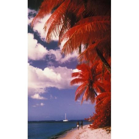 Plage aux cocotiers rouges, impression sur papier peint intissé, Imprim'Déco spécialiste du grand format
