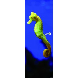 Sticker Décor de porte hippocampe