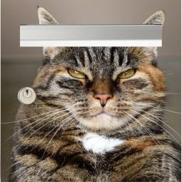 sticker boîte aux lettres le chat