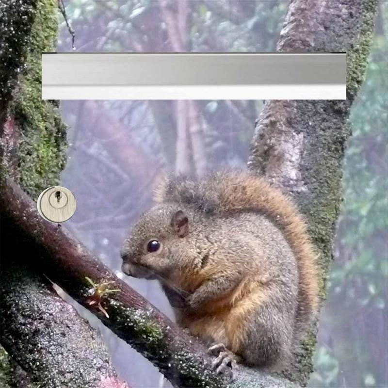 Sticker écureuil pour boite aux lettres
